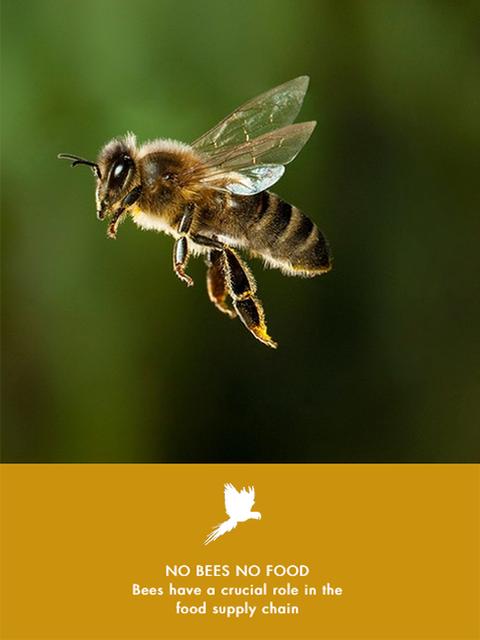 No Bees