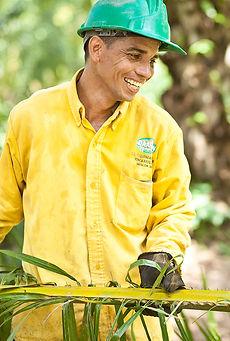 organic palm oil farmer supplier