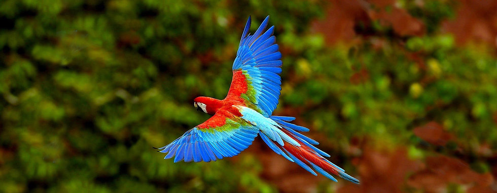 parrot flying - organic palm oil suppliers