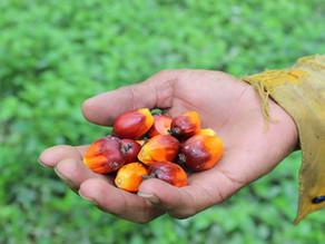 Covid -19 raising awareness of organic products