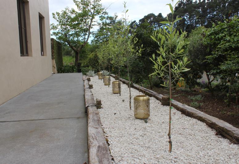 Side garden olive trees