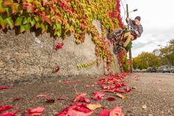 10# Autumn wall