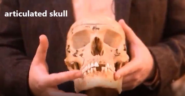 virtual tour shot-articulated skull.JPG