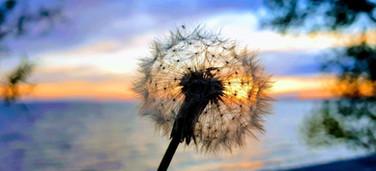 Make a Wish - N.Spina