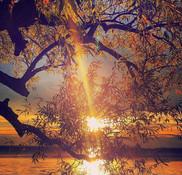 Sunset - B. McBride