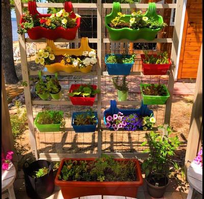 Plant Wall - B.McBride