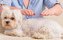 animal-reiki-dog - pic 2.jpg