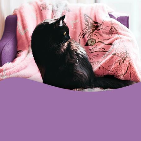 Um gato aquecido é um gato feliz