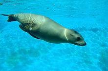 sea-lion-840790_1920.jpg