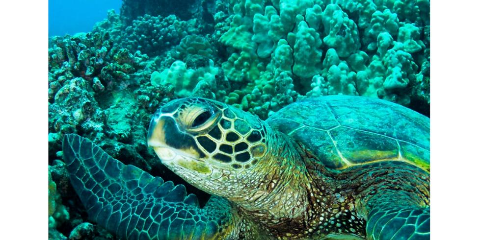 Meditación Tortuga de Mar