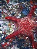 estrella de mar.jpg
