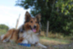 Educ'Aventure, Pension canine secondigny, Educateur canin.