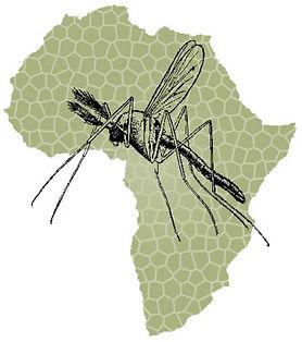 Malaria_0.jpg
