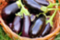 fresh-eggplant-in-basket-on-grass-PL5UTV