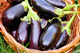 fresh-eggplant-in-basket-on-grass-PL5UTV