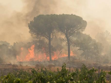 Grimaud : l'incendie a fait au moins 1 mort