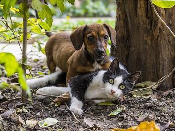 Animaux de compagnie : Les députés interdisent la vente de chiens et chats en animalerie