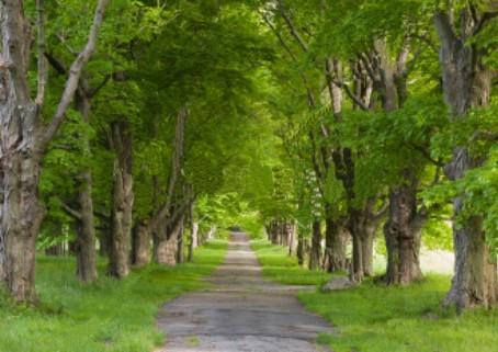 Arborização Urbana desafios de gestão.