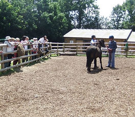 Demonstrating ET Equine Touch