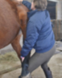 Relax and chill your horse with Equine Touch
