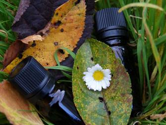 """""""Aromathérapie holistique de l'automne"""", qu'est ce que ça veut dire?"""