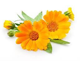 Soulager un coup de soleil avec l'aromathérapie