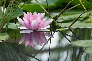 Reiki Savings Packages - Lotus Flower