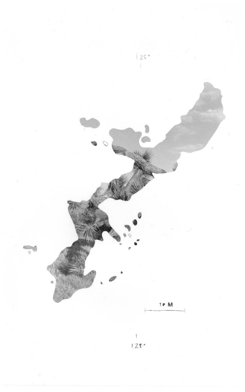 Okinaw Silver Gelatin Photogram Yucca Brivefolia