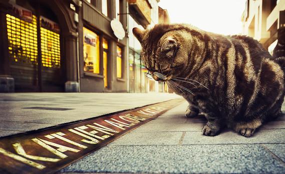 Kattestraat.jpg