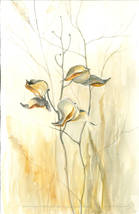 coco-connolly-watercolor-milkweed-for-ma