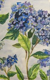 Sally Minsberg: Hydrangea