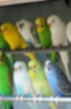 Budgies Sign.jpg