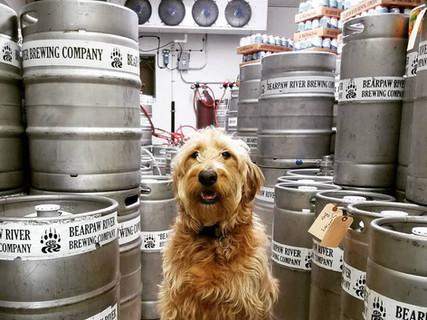 Dog in cold storage.jpg