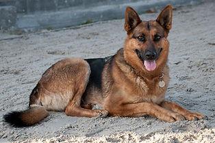 dog-2035437_1920.jpg