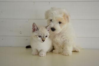 dog-cat-2520041_1920.jpg