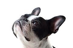dog-4465690_1920.jpg