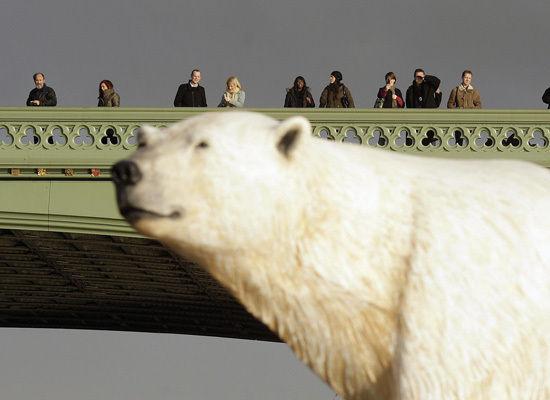Polar Bear on The Thames