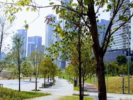 Reforestamos México, en pro del buen manejo del arbolado urbano en la CDMX