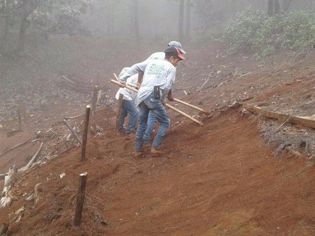 Acciones de Reforestamos para combatir los incendios forestales