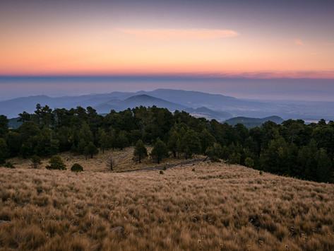 Conafor y Reforestamos lanzan la 6° edición del concurso Visión Forestal y Centinelas del Tiempo