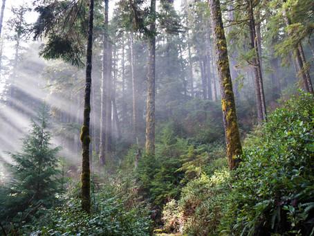 Bienes y servicios de los bosques