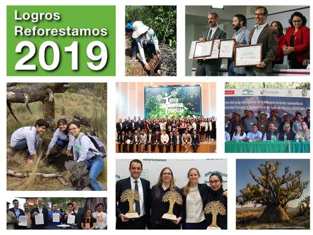 Logros Reforestamos 2019