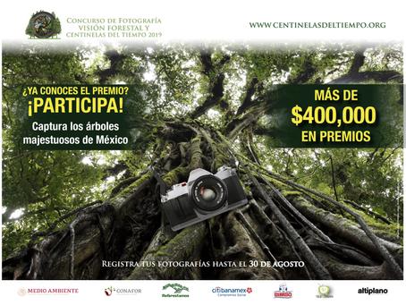 Celebra los árboles de México, participa en el Concurso Centinelas del Tiempo 2019