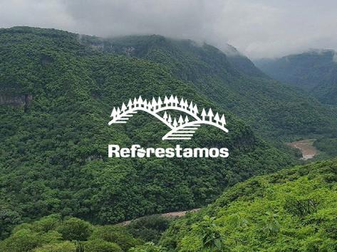 Reforestamos México y Santander unen esfuerzos para restaurar bosques y selvas