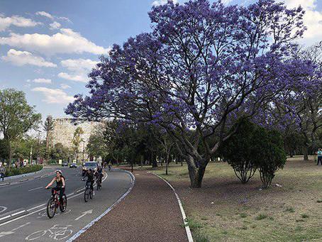 México se une a la iniciativa Tree Cities of the World por el cuidado del arbolado urbano
