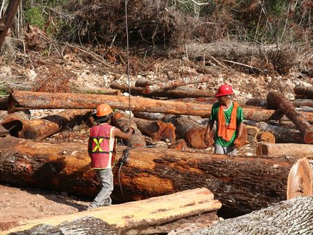 En Reforestamos, participamos en la planeación de la política ambiental de México