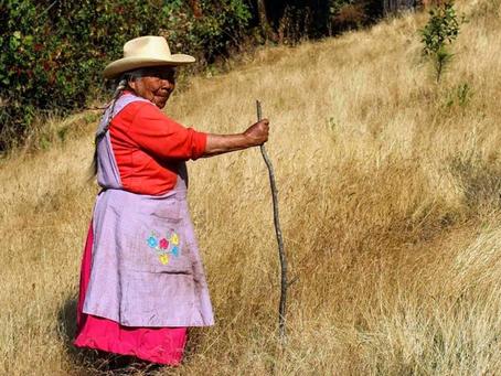 #8M2019: Las mujeres también viven y trabajan en los bosques