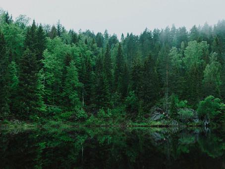 La conciencia ambiental en el sector privado
