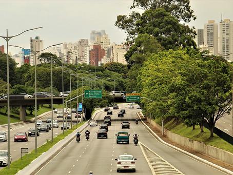 Arbolado urbano, legalidad y transparencia