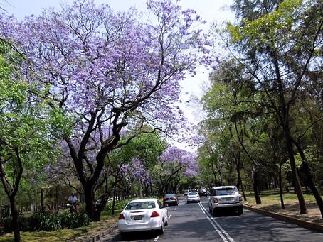 Los árboles que habitan las ciudades
